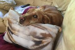comfy-pillow-sofa-e1492971708939