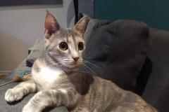 felice-cat-e1492980286868