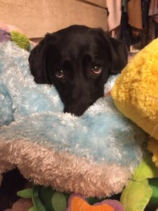 Lola loves the all the toys