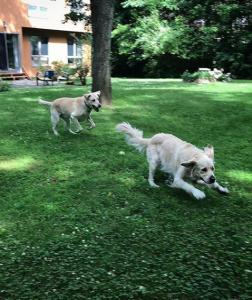 Fun in the back yard